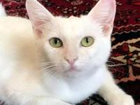 Snow's story Adorable, Clever, Affectionately Reserved!