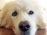 Snow's story NYS Registered Rescue # RR102 Children in