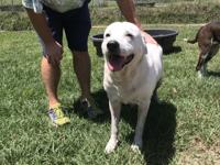 Hi! I'm Snow! I'm 7 years old and weigh around 70lbs.