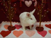 Snow is a darling bunny. She was abandoned outside with