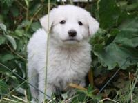 Snow is a very sweet, loving, playful puppy and an