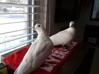 Hi, my name is Snow and I am a bonded pair with Drift!
