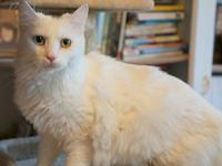 Snowball's story Meow my name is Snowball, I'm a 3 year