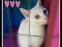 SNOWBALL's story Say Hello to beautiful & sweet