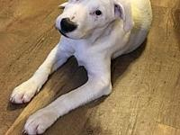 Snowball's story Snowball is a 8 month hound mix with