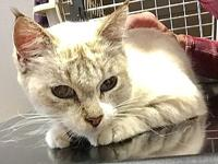 Snowball's story I was found at a feral colony. The