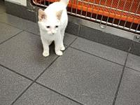 Snowball's story Snowball was surrendered at a