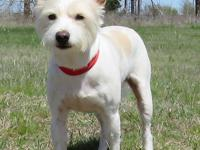 Snowball is a super cute little four year old male who