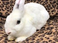 Snowflake is a dainty, pretty rabbit. She was rescued