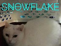 Snowflake's story If you have any questions about