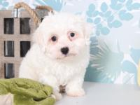 Snowy is such a sweet and loving puppy!!! Snowy will