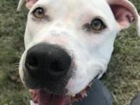 Snowy's story Need a dog that has a heart bigger than