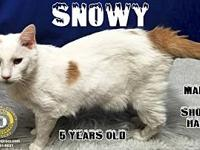 Snowy's story You can fill out an adoption application