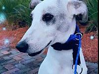 Snowy's story Snowy is a neutered 10 month old gentle,