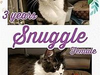 Snuggle's story Meet Snuggle, she is 3 years old, black