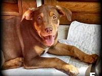 Snuggle Pups - Brown Sugar's story Please visit our
