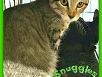 Snuggles's story C1808032 -- Snuggles is just as his