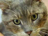 Snuggles's story Snuggles is our senior boy. He is at