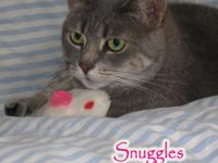 SNUGGLES  & MUFFIN    (Gray tabby females) DOB
