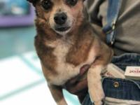 Adoption fee is $150, this dog is approx. 7 yrs old and