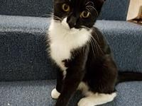 Socks's story Are you a Tuxedo fan? Then you will love