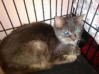 Sofia's story Sofia 4 years old DSH/Spayed Female See