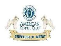 AKC Champion Bloodlines WESTMINSTER 2015 AWARDS BEST OF