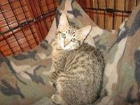 Softie's story COURTESY LISTING: Smokey-colored SMUDGE
