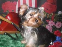 Description:Beautiful male, DOB April 21, 2012. Ready