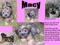 Macy is a fun, fluffy little girl. She loves to play