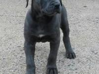 Bella Bella is First pick of the litter and ready for