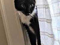My story Somme is energetic, playful and sweet kitten.