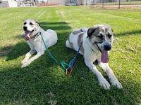 Sonny and Nicky's story Please contact MaryAnn Lagana