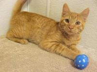 Sonny Boy's story No kitten should grow up in a shelter