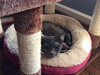 Sonny's story Sonny is a solid gray sweetheart. He came
