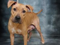 SONYA (A344435) IS A 3 YEAR OLD PIT BULL MIX.  HER
