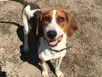 Sooner the coonhound will be ready for adoption in the