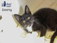 SOOTY's story Loveable, adorable and sweet all wrapped