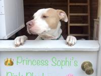 Sophi is a very sweet girl. Affectionate!! Her favorite
