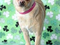 Sophia's story Sophia #9533 is a 2-year-old female,