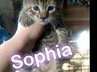 Sophia's story These sweet kittens are litter box