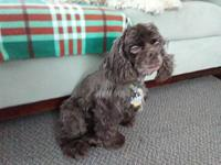 Sophie 7yr's story Sophie is currently fostered in