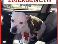 Sophie's story Emergency!! Sophie is in risk of being