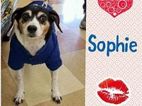 My story Sweet, precious Sophie was found in the middle