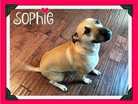 Sophie's story COURTESY POST ADOPT ME Sophie 3.5 years
