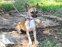 SOPHIE's story What a little sweetheart! Sophie is a