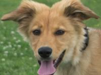 Sophie is a 5-month-old Collie/Shephard mix. This