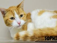 Sophie is a sweet 9-year-old female domestic cat. She