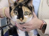 Sophie is a 3 year old outgoing and confident female