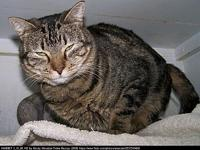 Sophie's story I'm a lovely brown classic tabby. You